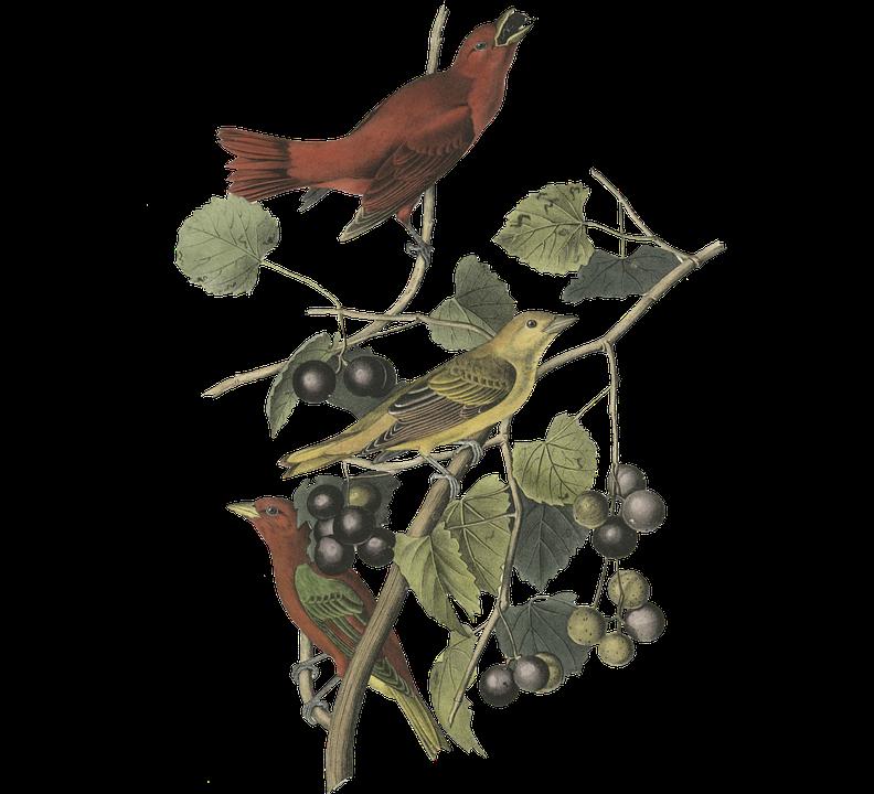 Bird, Leaves, Berries, Nature, Branch, Flying, Twig