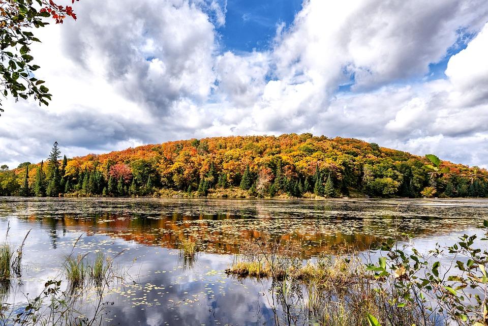 Canada, Indian Summer, Ontario, Autumn, Leaves, Nature