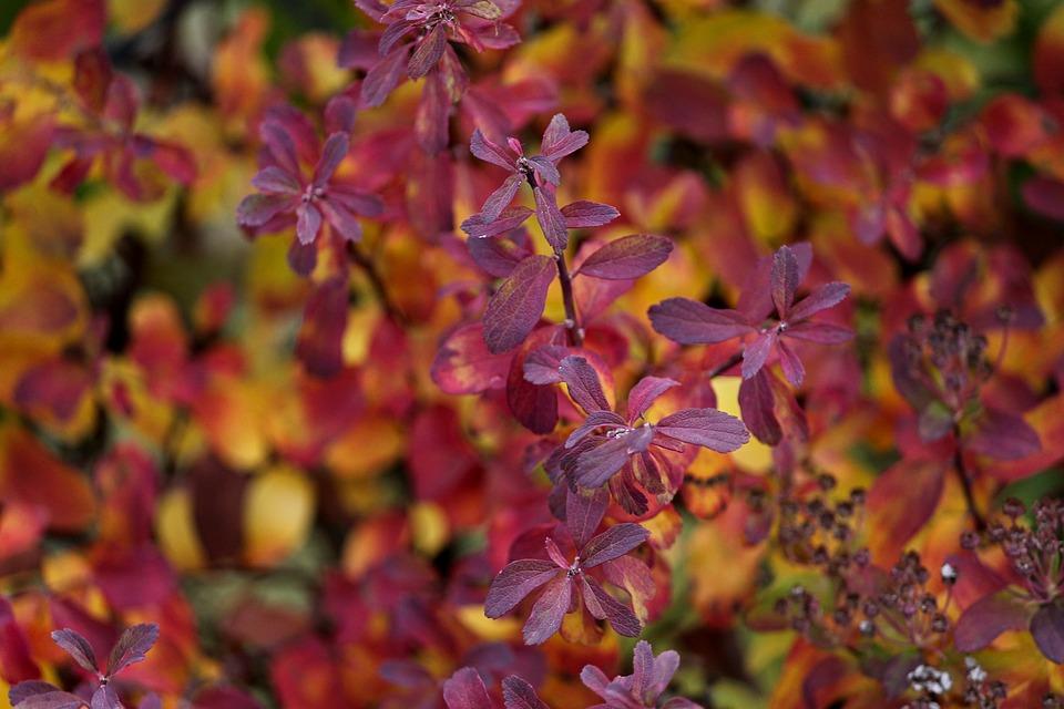 Autumn, Colorful, Leaves, Colored, Nature, Fall Foliage