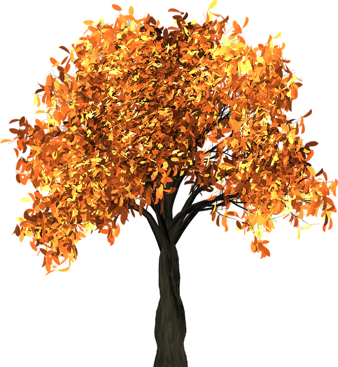 Tree, Leaves, Autumn, Fall, Branches, Isolated, Nature