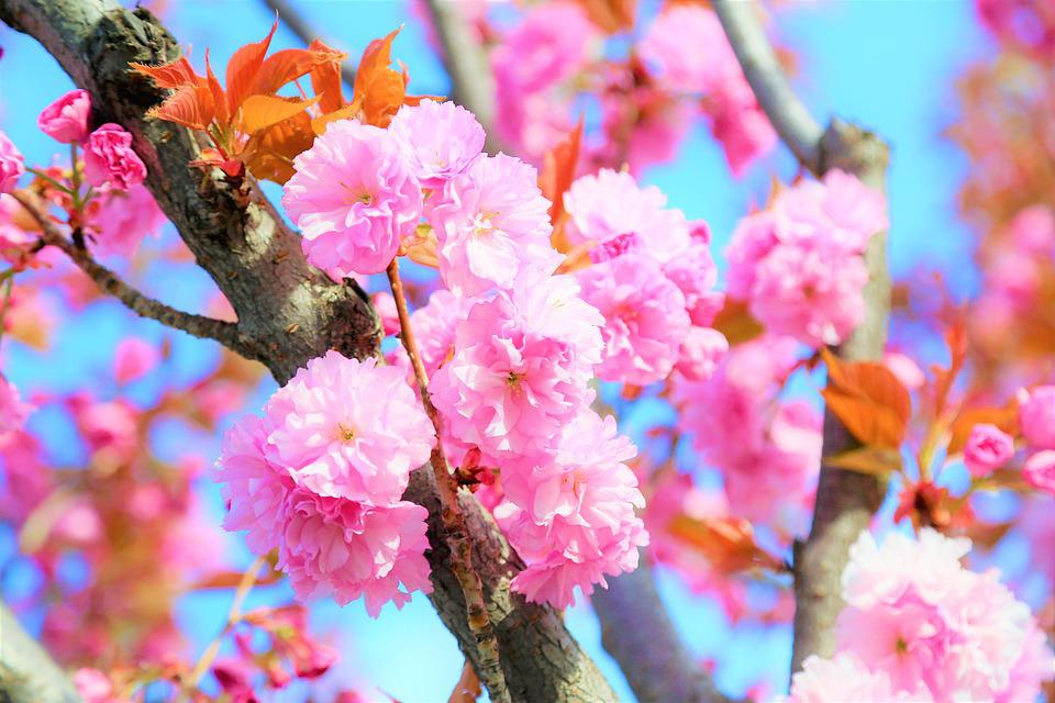 Flower, Spring, Nature, Leaves, Plant, Tree, Color