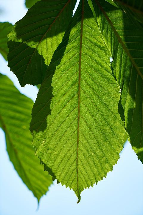 Green, Leaves, Macro, Nature, Plant, The Leaves Are