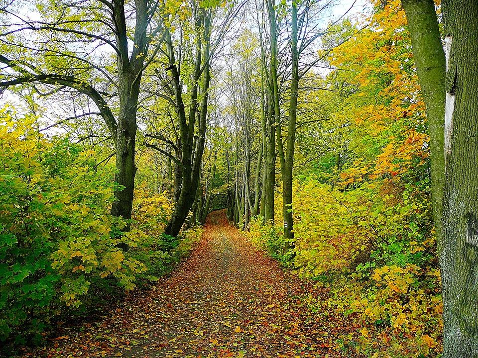Road, Forest, Trees, Tree, Trip, Nature, Leaves, Season
