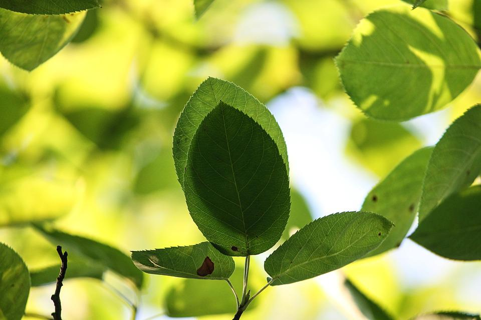 Shadow, Leaves, Branches, Nature, Canopy, Summer, Green