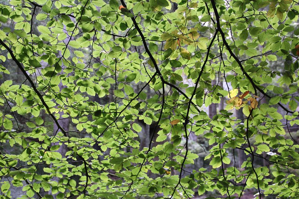 Leaves, Tree, Crown, Green, Branches, Forest, Nature