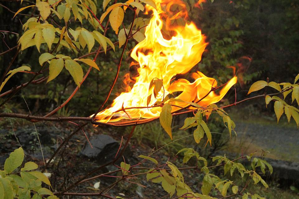 Fire, Nature, Life, Forest, Flame