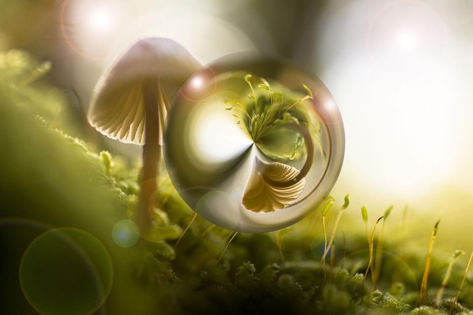 Nature, Mushroom, Light, Shadow, Green, Forest, Meadow