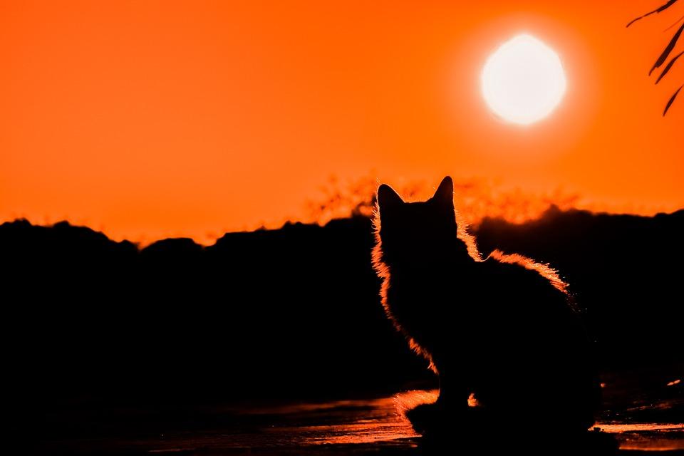 Sunset, Cat, Shadows, Silhouettes, Nature, Light