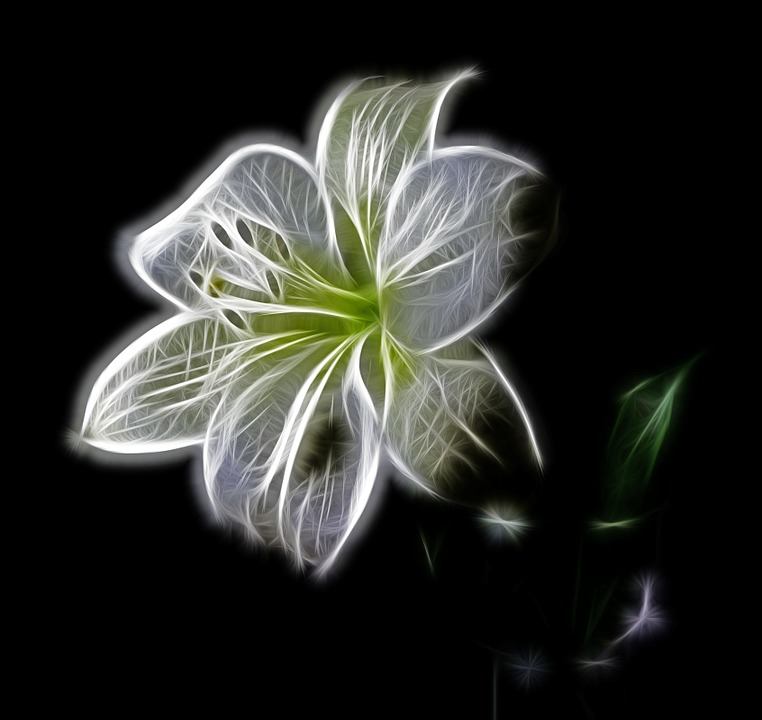 White, Lily, Flower, Nature, Beauty, Digital Art