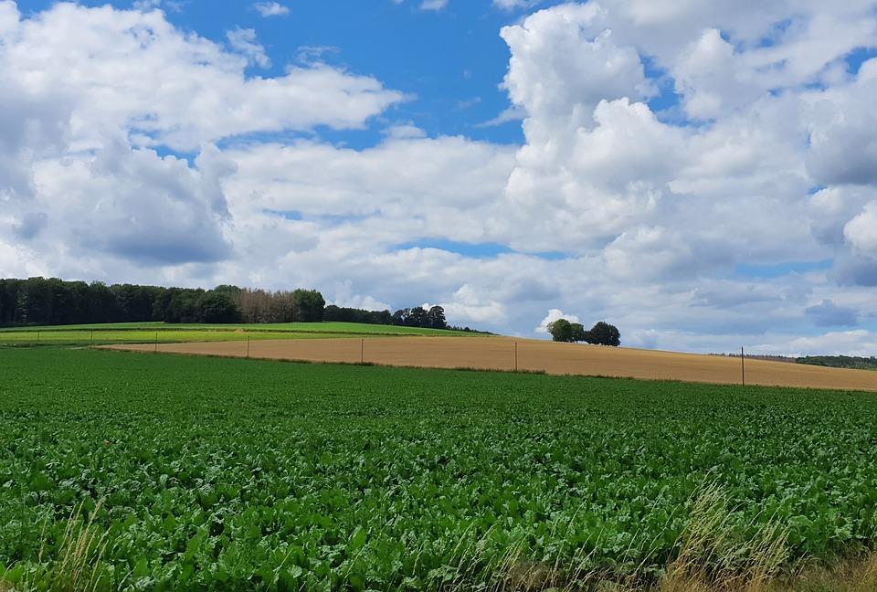 Nature, Landscape, Lip, Field, Agriculture, Scenic