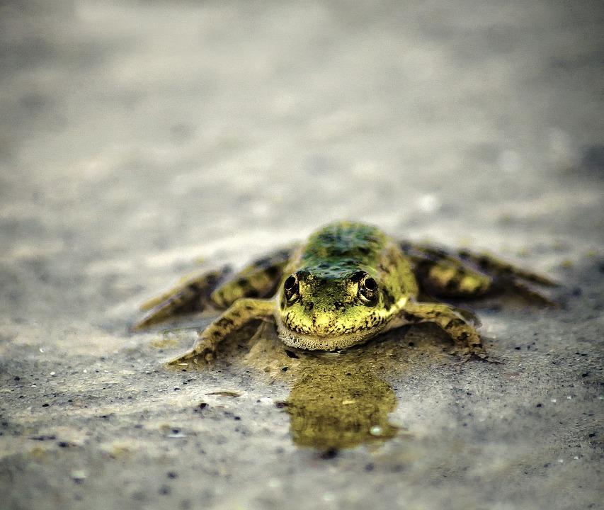 Reptile, Amphibian, Nature, Living Nature, Animals
