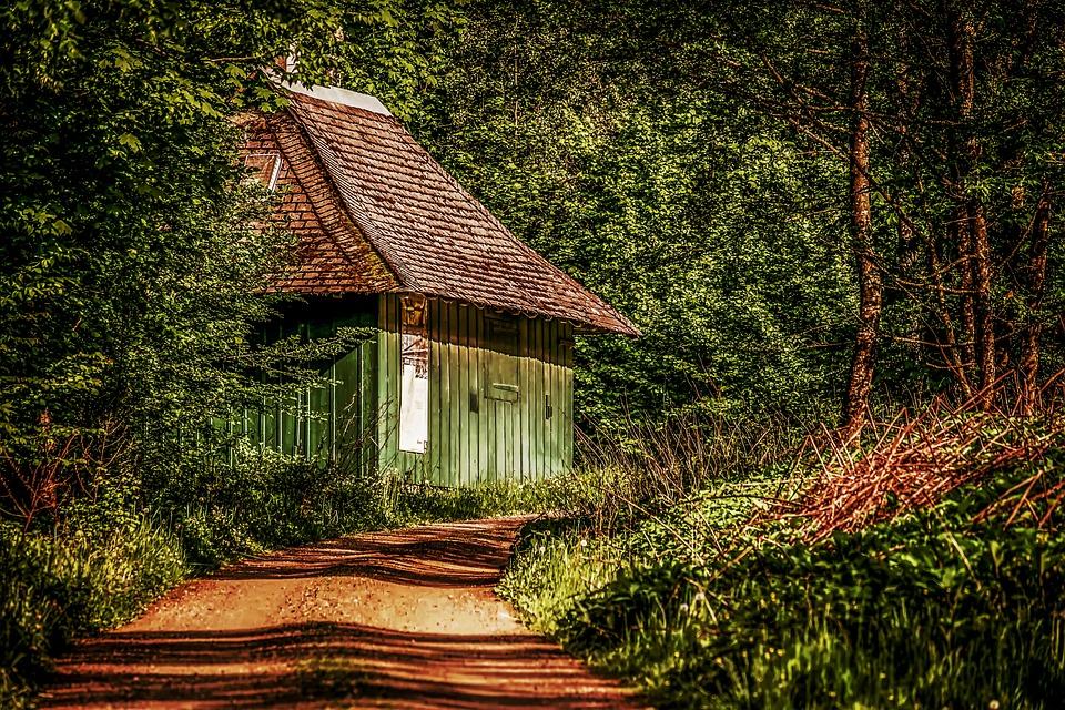 Hut, Roadside, Forest, Log Cabin, Nature, Forest Lodge