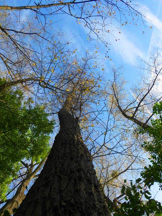 Tree, Log, Wood, Sky, High, Forest, Grow, Nature