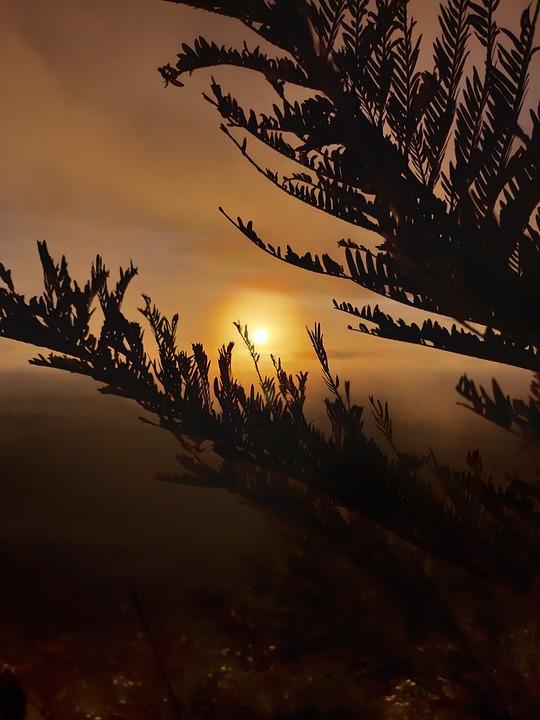 Sun, Sunset, Nature, Beauty, Twilight, Girl, New, Love
