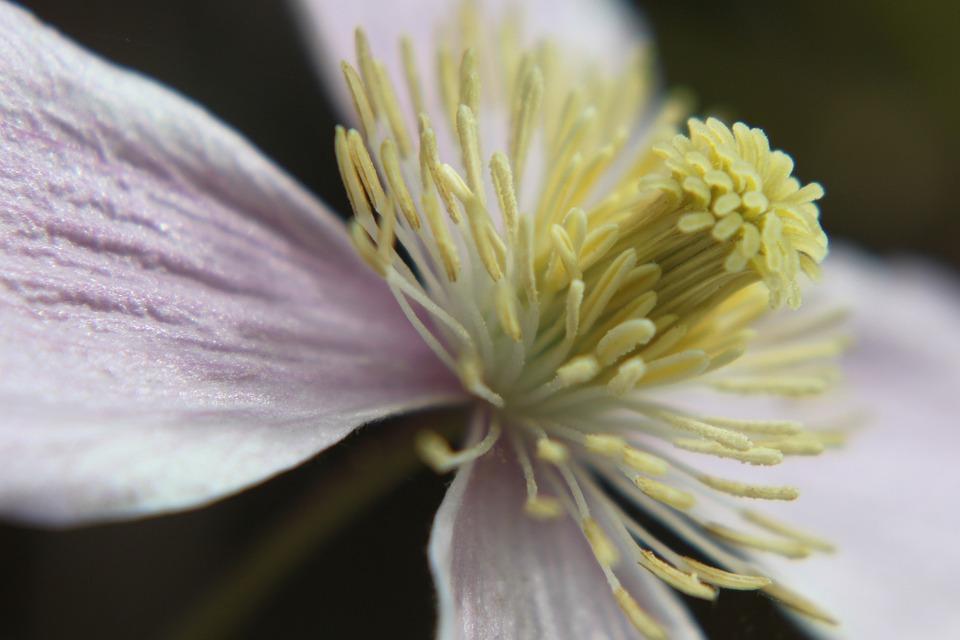 Blossom, Bloom, Macro, Close Up, Flower, Nature, Garden