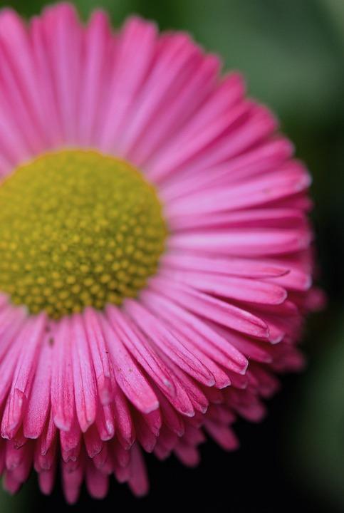 Flower, Nature, Plant, Macro