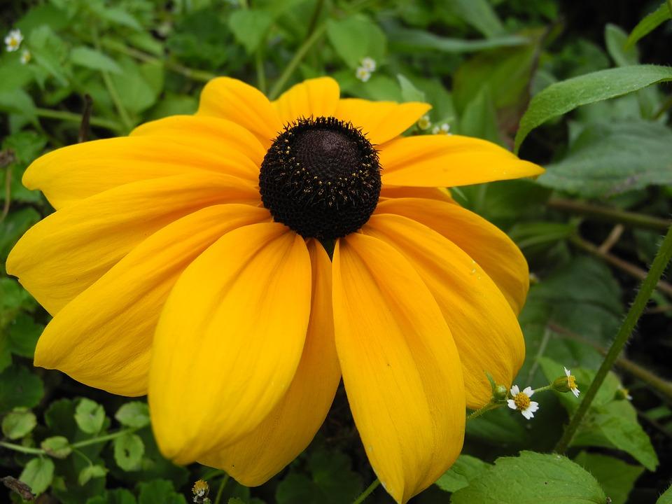 Flower, Yellow Petals, Garden, Macro, Nature