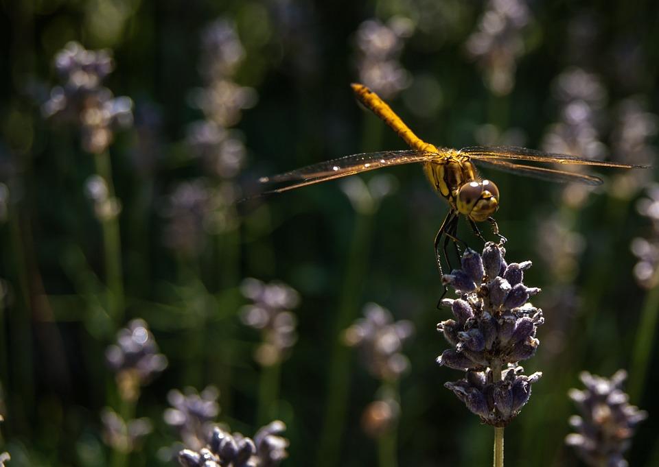 Dragonfly, Nature, Bug, Macro, Green, Summer, Animals