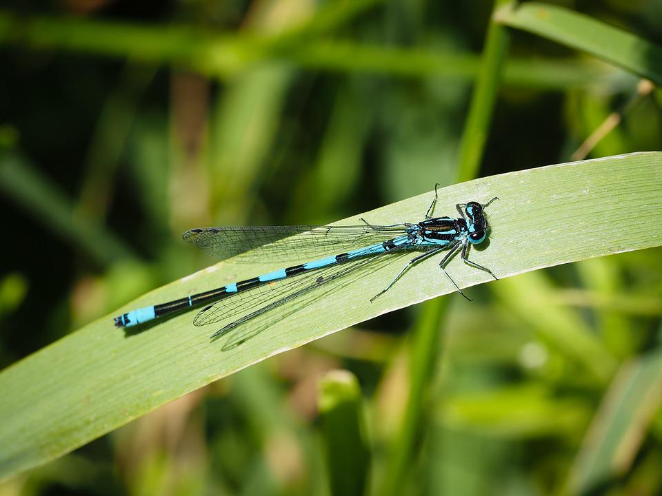 Dragonfly, Insect, Nature, Animal, Macro, Wings, Green