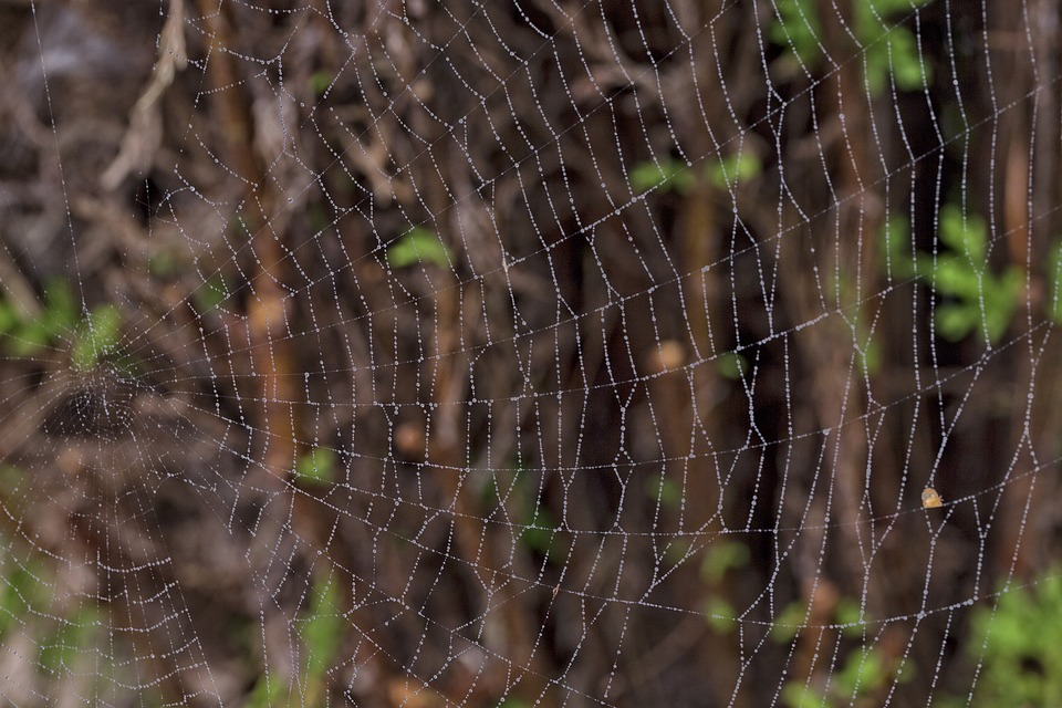Macro, Cobweb, Nature, Network, Garden, Silk Thread