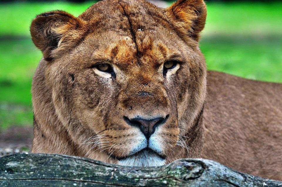 Mammal, Fauna, Animal, Nature
