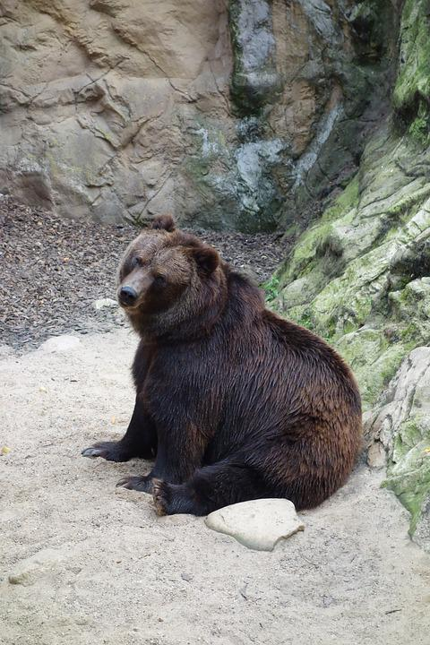 Bear, Animal, Nature, Animal World, Brown Bear, Mammal
