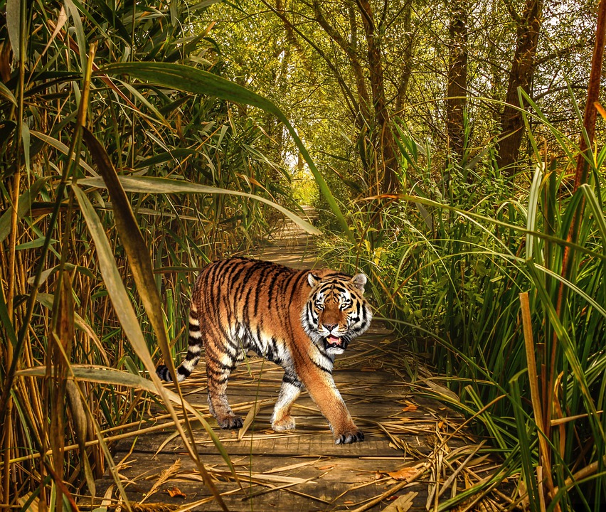 Nature, Animal World, Mammal, Jungle, Grass, Thicket