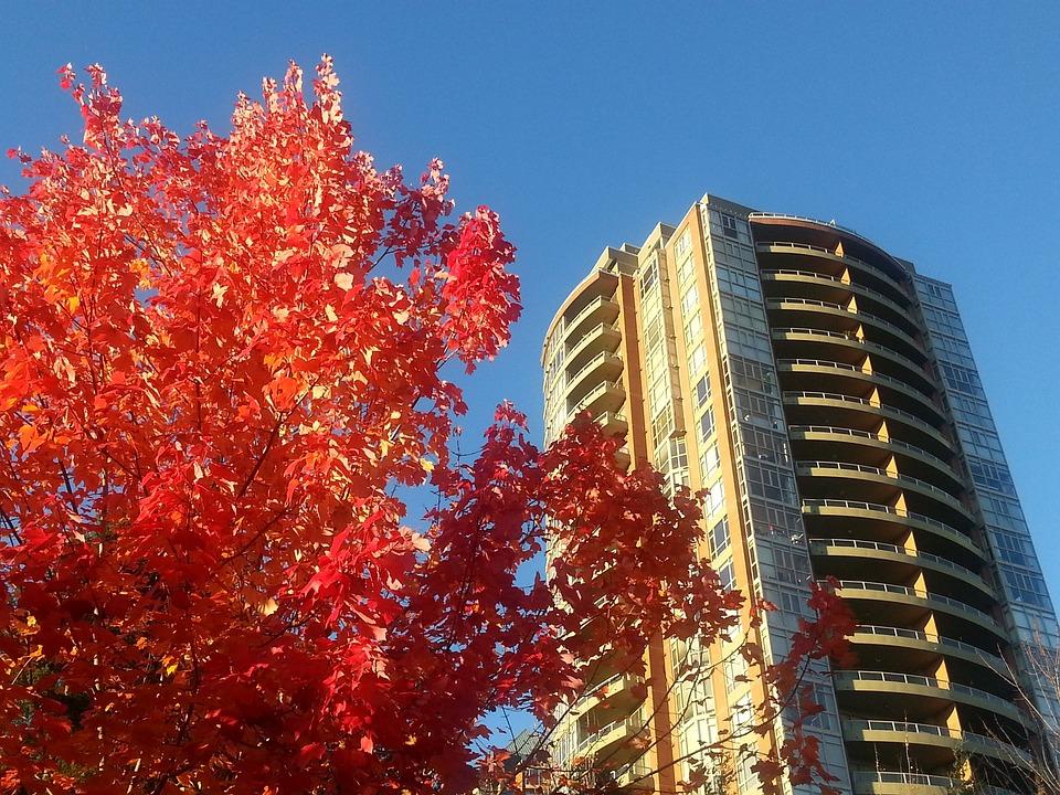 Maple Leafe, Colour, Nature