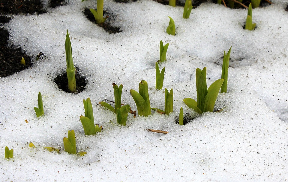 Early Spring, March, Plants, Nature, No One, Plant