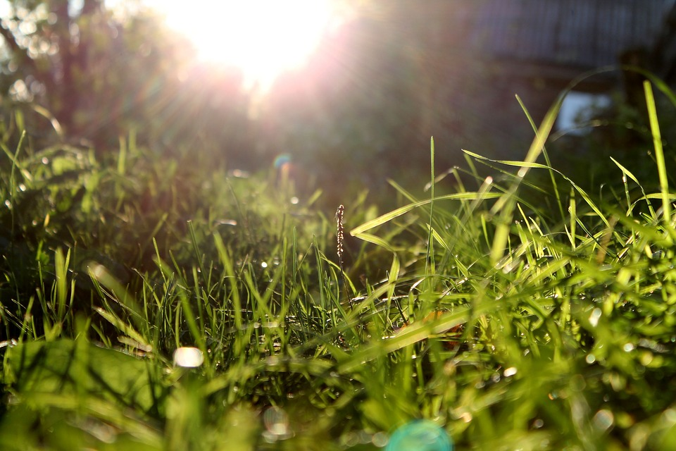 Sun, Grass, Sunny Day, Landscape, Nature, Meadow