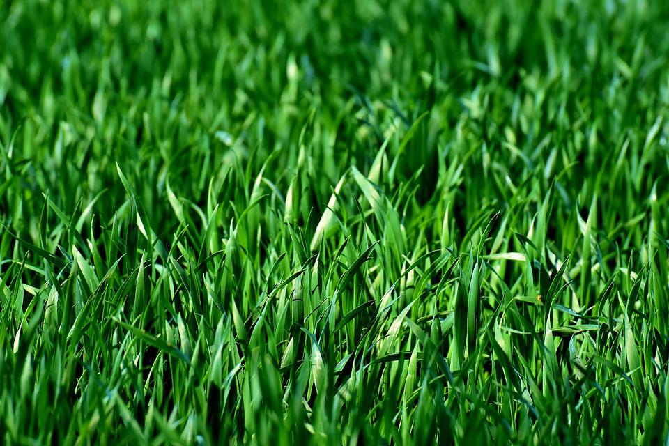 Meadow, Field, Grass, Green, Nature, Landscape, Rush