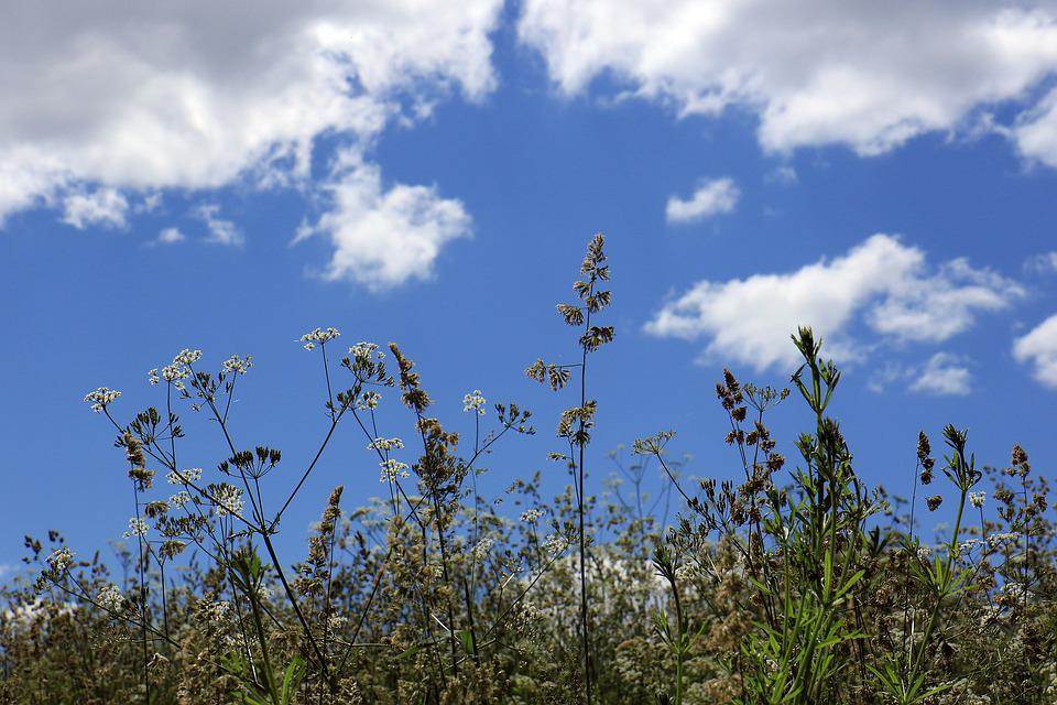 Meadow, Grass, Sky, Clouds, Nature, Green