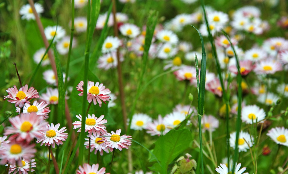 Flowers, Meadow, Flora, Summer, Nature