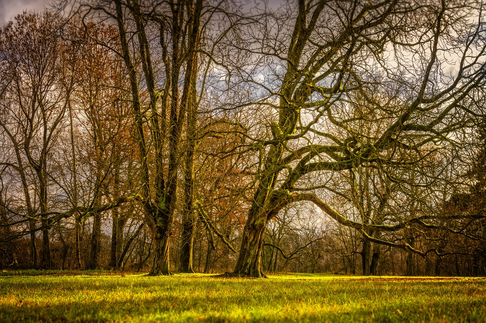 Tree, Meadow, Landscape, Nature, Rural, Grass, Mood