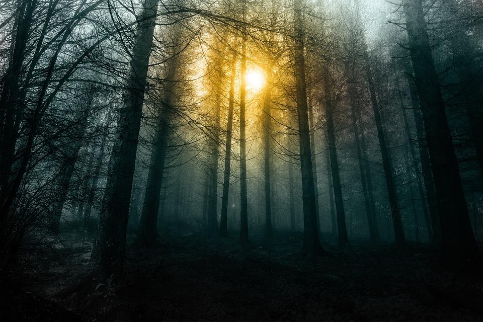 Forest, Morning, Fog, Nature, Trees, Tree, Wood, Mist