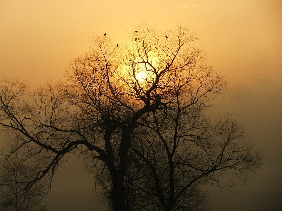 Sunrise, Fog, Tree, Silhouette, Morning, Mist, Nature