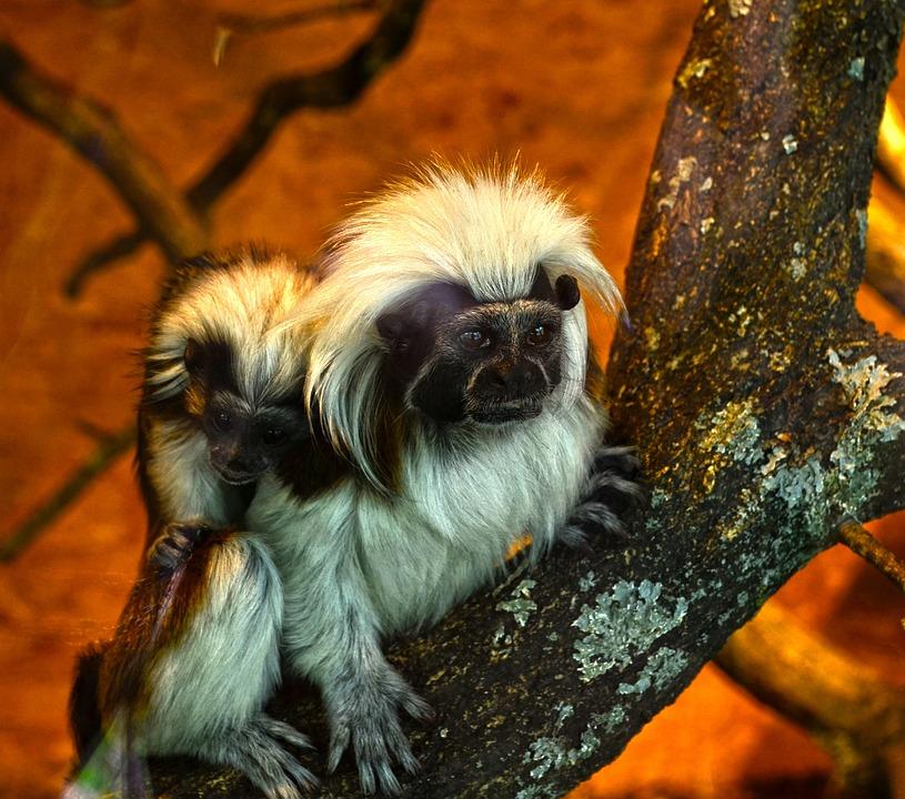 Zoo Enclosure, Monkey, Animal, Branch, Nature