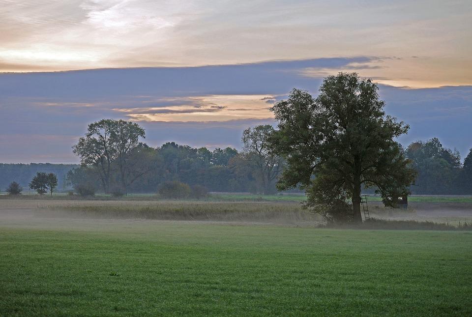 Ground Fog, Fog, Morning, Autumn, Nature