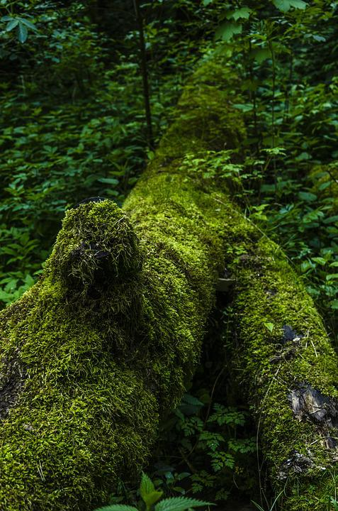 Moss, Nature, Forest, Tree, Green