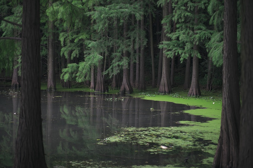 Forest, Lake, Moss, Nature, River, Trees, Water, Woods