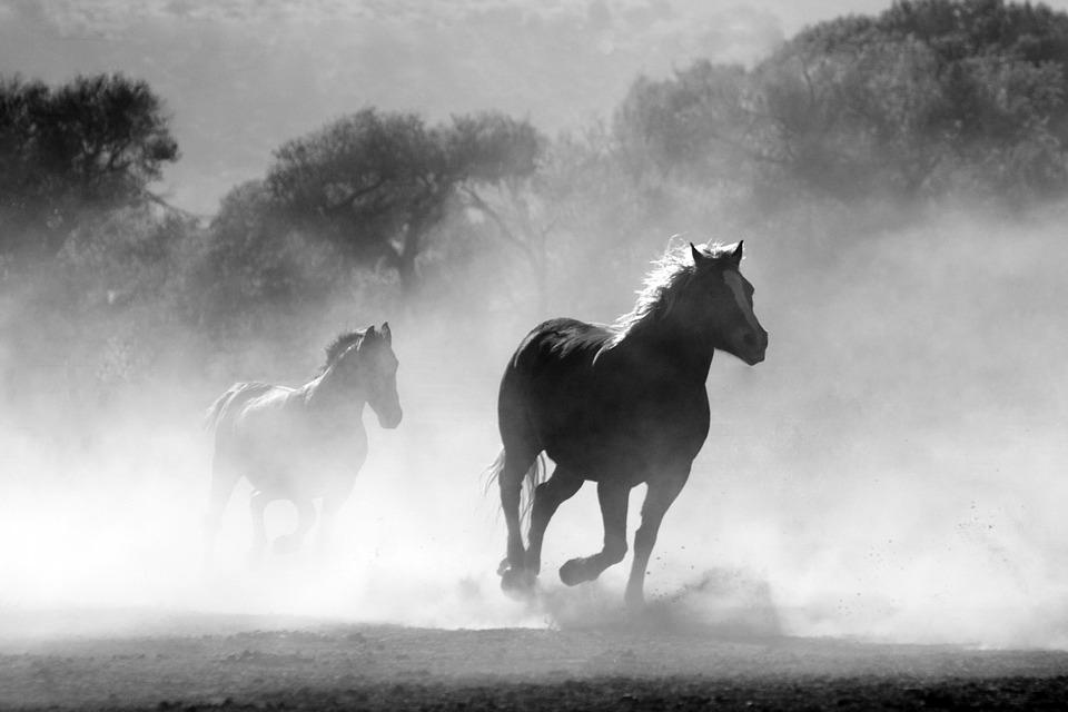 Horse, Herd, Fog, Nature, Wild, Equine, Motion, Gallop