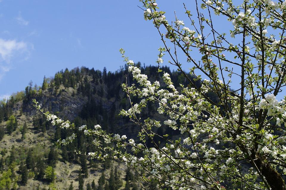 Mountains, Allgäu, Alpine, Landscape, Hiking, Nature