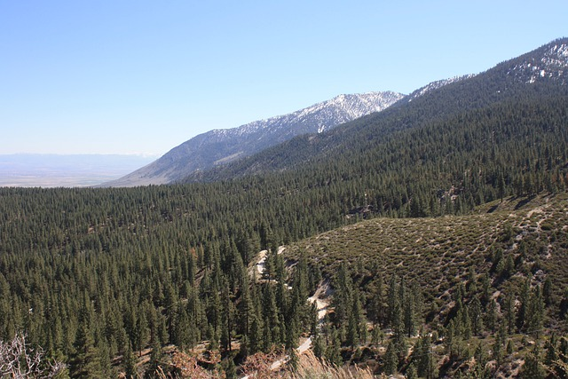 Nevada Nature: Free Photo Nature Mountains Nevada Forest Scenery Outdoor