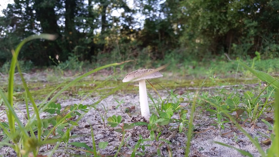 Mushroom, Woods, Fungus, Natural, Nature, Food, Forest