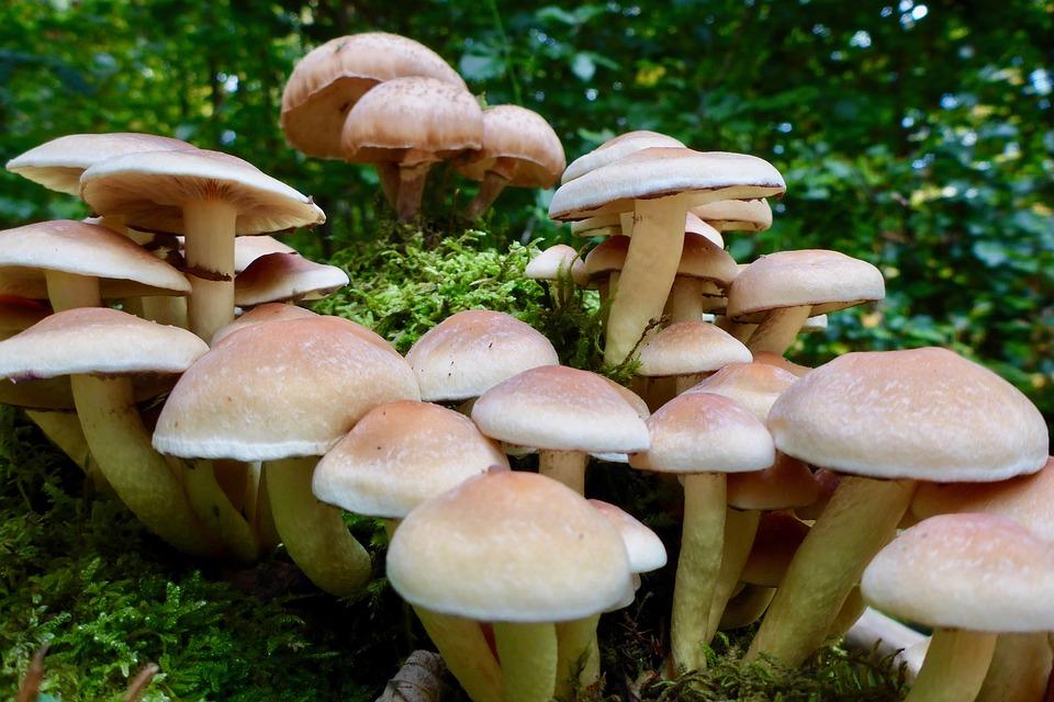 Forest, Mushrooms, Nature, Mushroom, Autumn