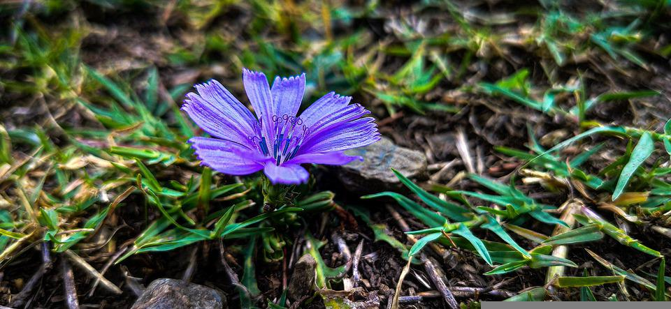 Farazandthelens, Myencounterwithnature, Nature, Chicory