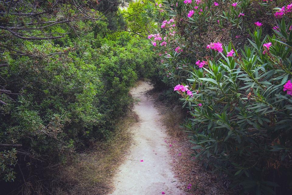 Cyprus, Akamas, National Park, Avakas Gorge, Nature