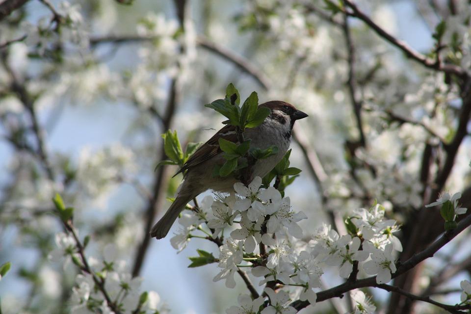 Spring, White, Bloom, Nature, Apple Tree, Leaves, Natur