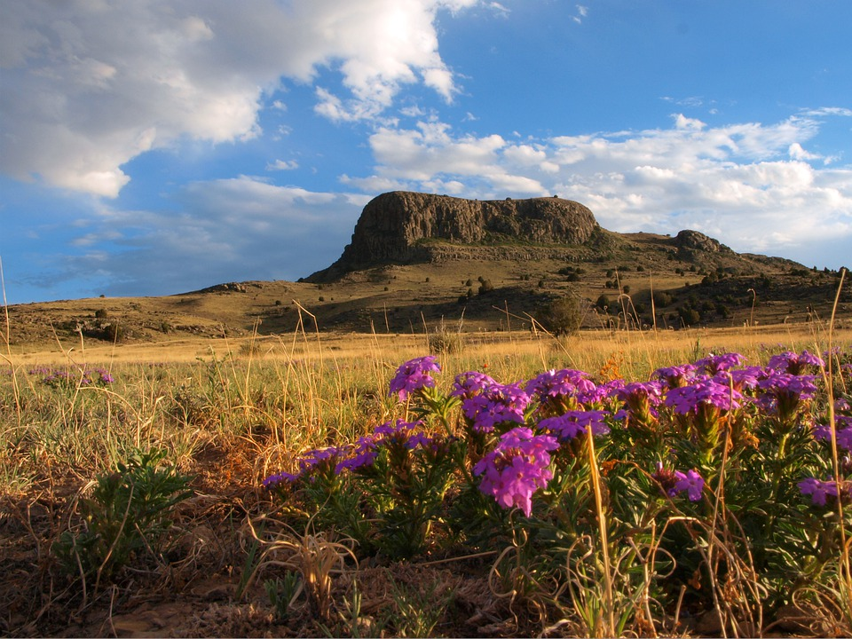 Purple Flowers, Beautiful, Nature, Landscape, Natural