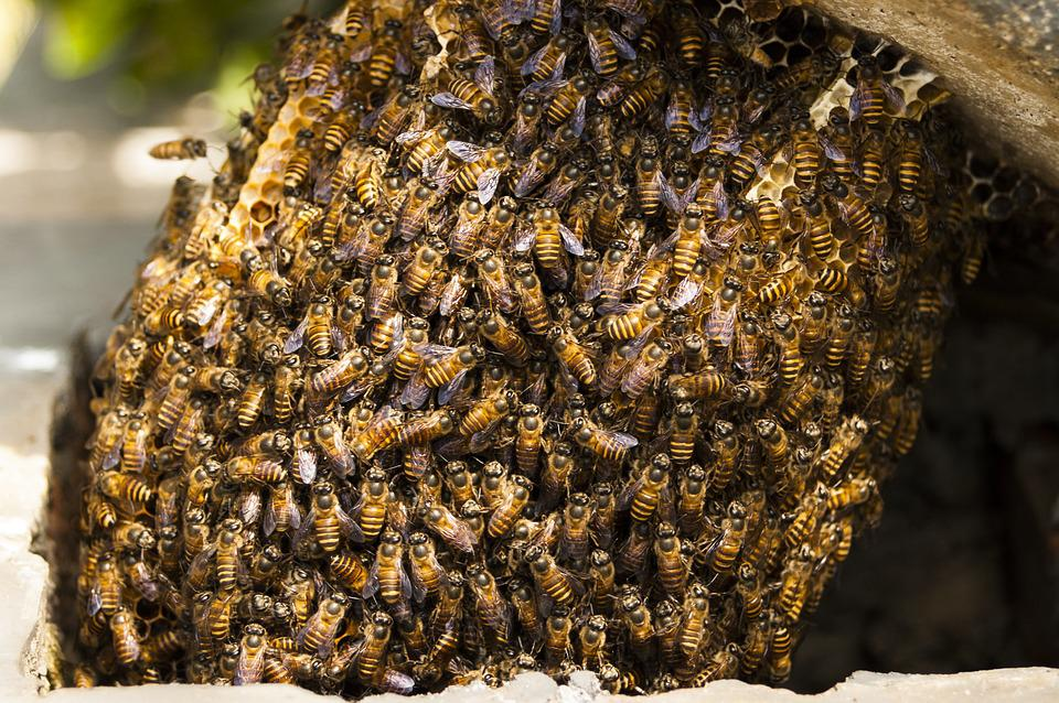 Bees Hive Honey Insect Nature Beehive Natural